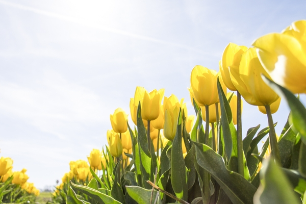 Let's Make Your Marketing Spring Into Action