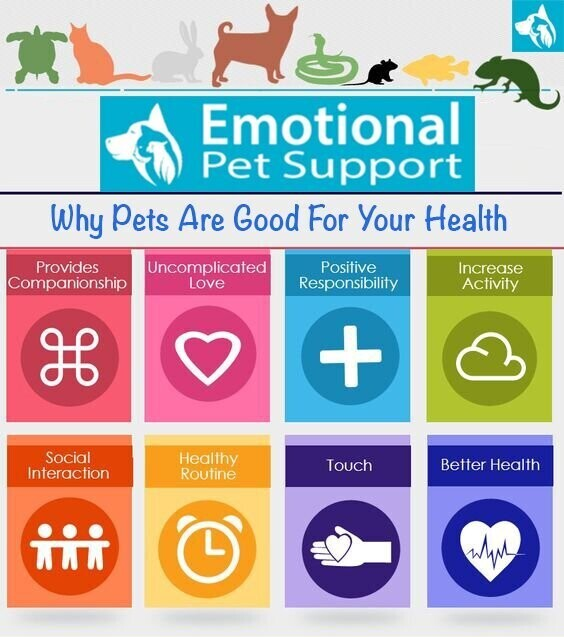 Andy Garland Therapies - Counselling Cardiff - Mental Health Services Cardiff - Cardiff Therapists - animals and mental health - animal therapy