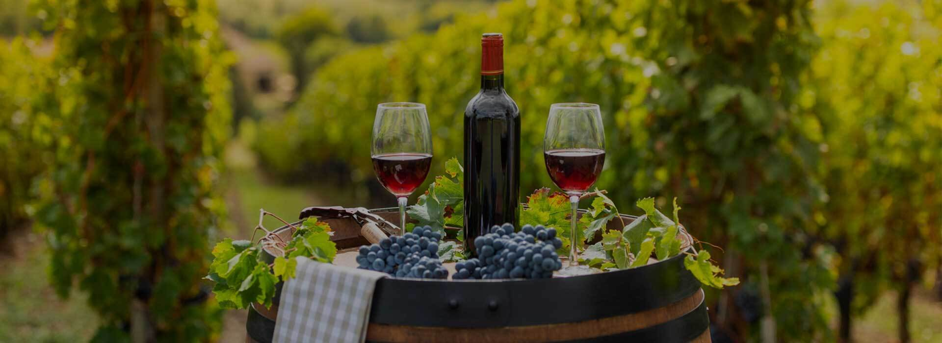 Wine masterclass presenter