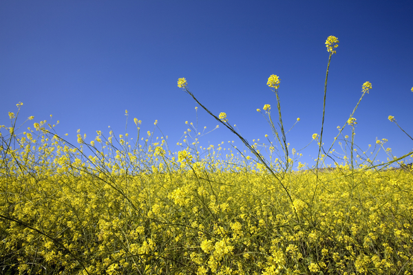 Is it really hay fever?