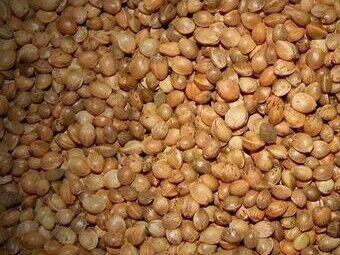 Hemp Seed - Dry - 15kg