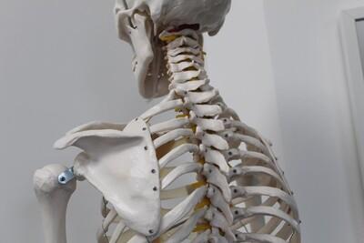 Jacob Stanley Chiropractor