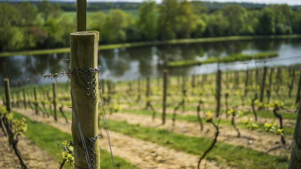 Tethering Vines