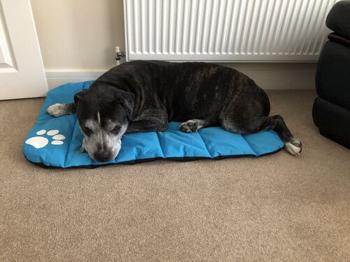 Padded Dog Bed