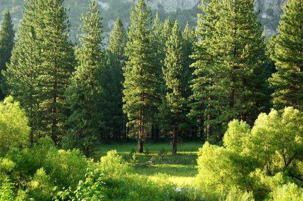 What Do Trees Do For Our Planet?