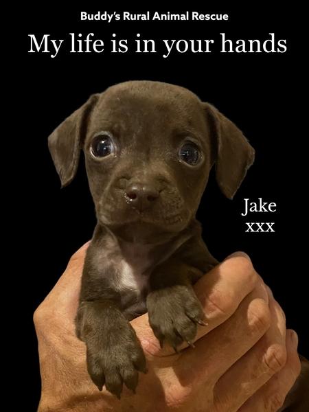 Jake Update