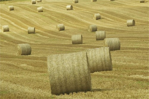 Hay & Straw Bale Security