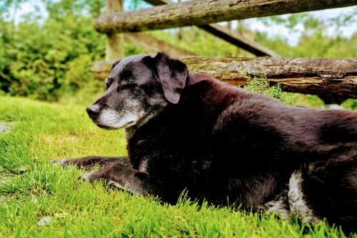Saying goodbye to our beloved dog Rowan