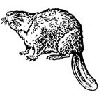 Beaver Rubber Stamp (Available in 3 sizes) from £6.89