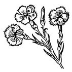 Carnations Rubber Stamp (Available in 3 sizes) from £6.89