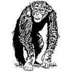 Chimp Rubber Stamp (Available in 3 sizes) from £6.89