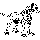 Dalmation Rubber Stamp (Available in 3 sizes) from £6.89