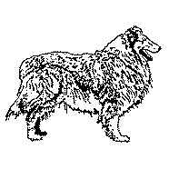 Rough Collie Rubber Stamp