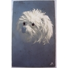 1920s Glass Eyed Real Photo Postcard: White Terrier
