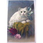 1920s Glass Eyed Real Photo Postcard: White Cat