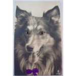 1920s Glass Eyed Real Photo Postcard: Long Haired Collie