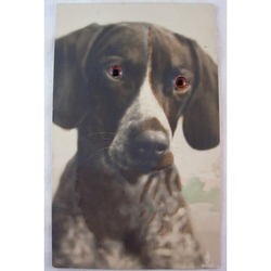 1920s Glass Eyed Real Photo Postcard: Dalmatian