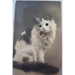 1920s Glass Eyed Real Photo Postcard: Black & White Cat