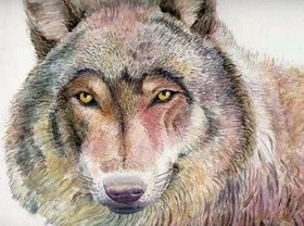 Water colour painting of a wolf