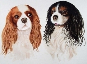 Two King Charles spaniels in watercolour and gouac