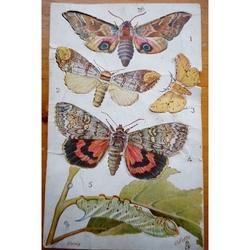 Tuck's Oilette Butterflies Postcard
