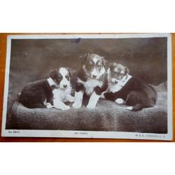 We Three Puppies 1917 Real photo Postcard