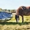 Penclawdd Donkey