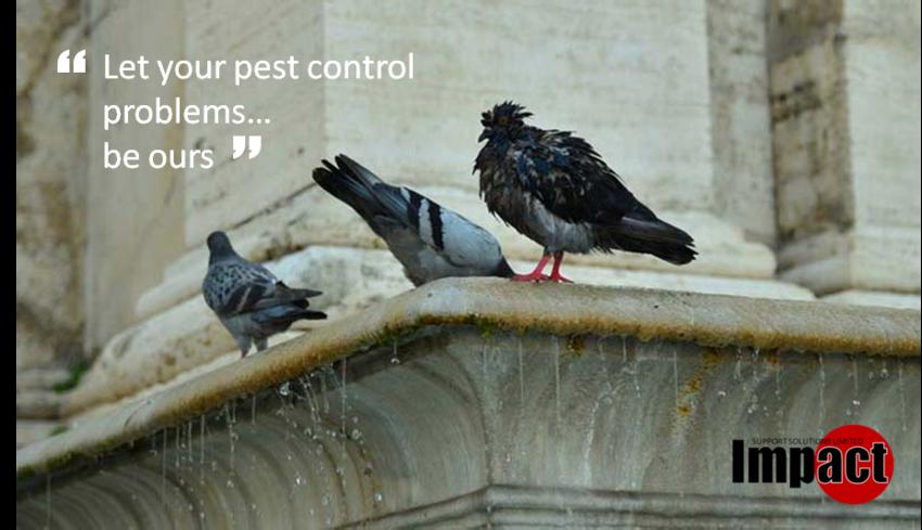 Pest Control Main
