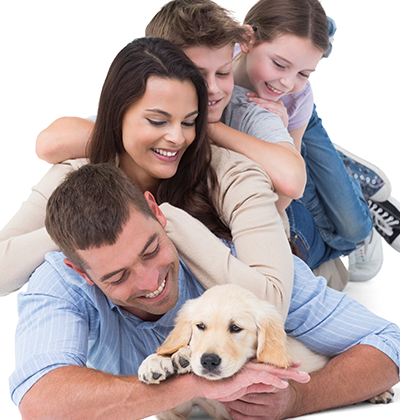 Family Legal Solicitors, solicitors for the whole family