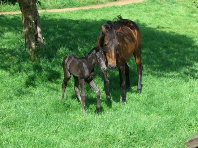 Foaling Livery