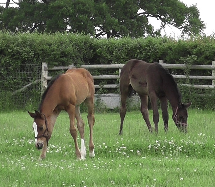 Weanling/Youngster Livery