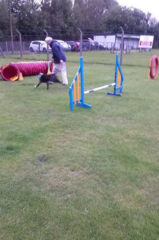 Contact Us Puppy & Agility