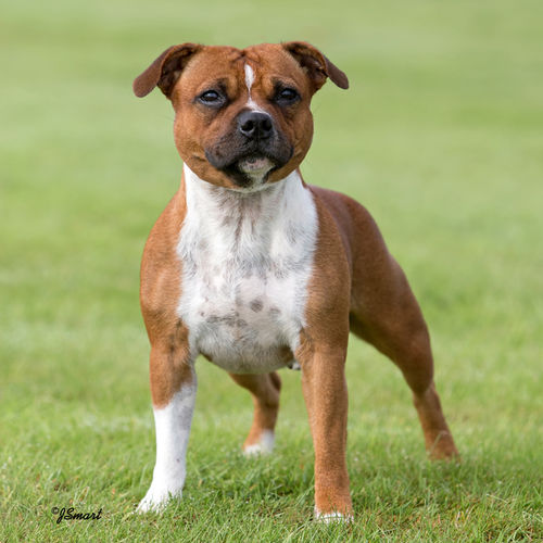 18th Feb 2017 - Best Of Breed & Terrier Group 4