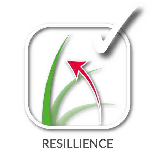 The design of our artificial grass makes them very resilient