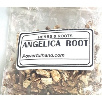 Angelica Root