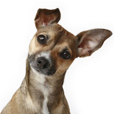 Dog spa, dog salon, dog styling, qualified, insured