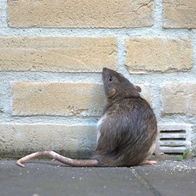 Pest Control Norfolk, Exterminators Norfolk, Pest Control Cambridge