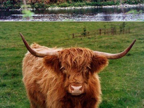 Hawick and the Scottish Borders
