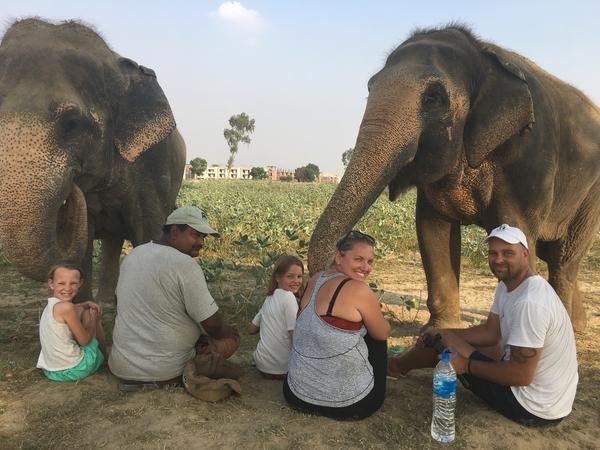 Five days, nine elephants, four happy Bulls
