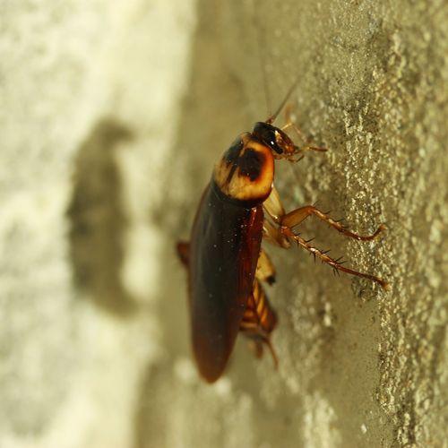 Cockroach runs across bar during hygiene inspection!