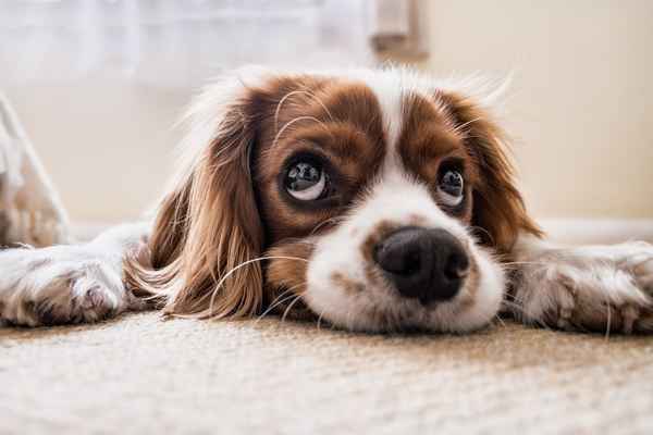 Love your pets, but not their smell? Tips to keep on top of pet odours.