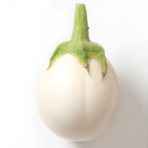 White Eggplant (มะเขือไข่เต่าขาว)