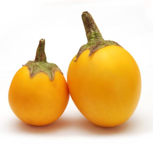 Yellow Eggplant (มะเขือเหลือง)