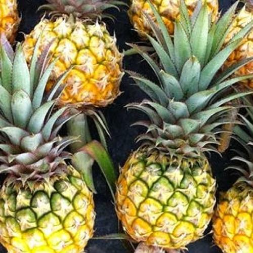 Thai Pineapple (สัปปะรดศรีราชา)