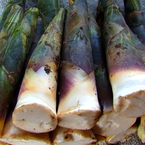 Bamboo Shoots (หน่อไม้)