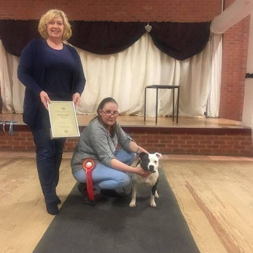 The Staffordshire Bull Terrier Club