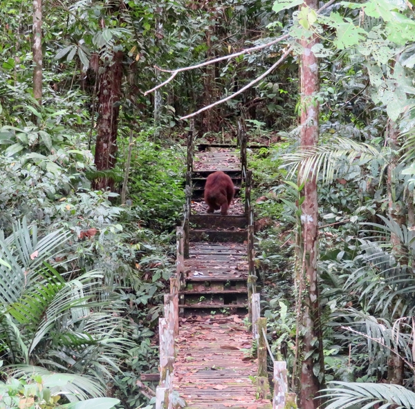 Why Borneo taught us a lesson and what we learned
