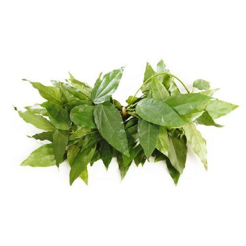 Yanang Leaf (ใบย่านาง)