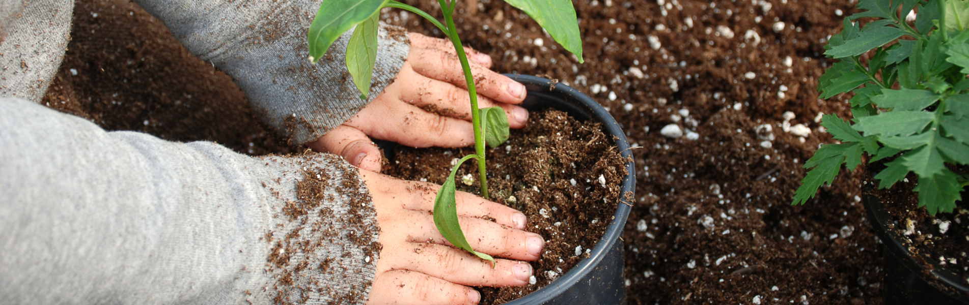 Plastic Plant Pots, Jiffy Pellets and Plant Pots, Greenhouse Glazing Clips