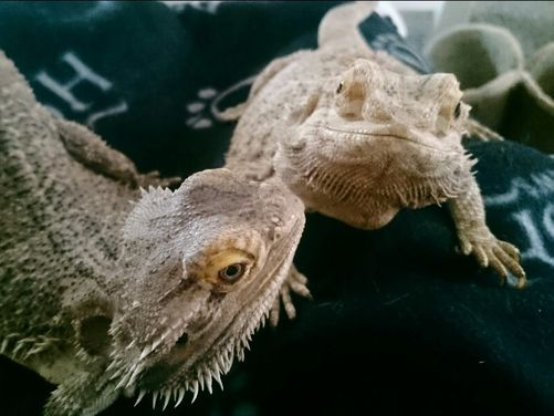 Zilla and Spyro